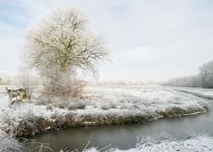 Zo mooi! (Geziena) Tags: winters winter koud vorst ijs sneeuw vriezen rijp boom natuur wintersplaatje olympus omdem1 1240mm