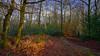 Where is winter? (TanzPanorama) Tags: woods forest england addington january seasons 4seasons sonya7ii fe1635mmf4zaoss sel1635z sonyilce7m2 variotessartfe1635mmf4zaoss winter globalwarming landscape tree foliage leaves tanzpanorama surrey croydon