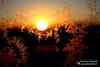 Sonneaufgang mit Eisblumen (Photos by FC - (Fortune Cookie)) Tags: sonnenaufgang eis eisblumen sunset eiskristall schneeblume nidda sun photosbyfc jeannettedewald