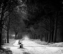 p_5572 (lo.tra) Tags: crossing maandagsdijk lenderiet achterhoek trees snow lotra