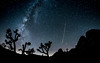 JOSHUA TREE 2016 (RestInPaint) Tags: united states usa travel sadgas ilce sony zeiss restinpaint night stars long exposure milky way desert space