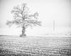 Frosty tree, the Nièvre, January 2017 (serial_snapper) Tags: publishedinstagram républiquefrançaise tree blackwhite landscape winter nièvredépartement bourgognefranchecomtéregion ciez bourgognefranchecomté france fr