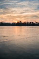 Vol d'échassiers (schmittarnaud) Tags: lac gelé ice glace gel soleil silouette nature frozen