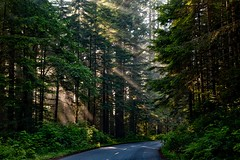 forest-1598756_1280 (randy-travel) Tags: mostbeautiful places world