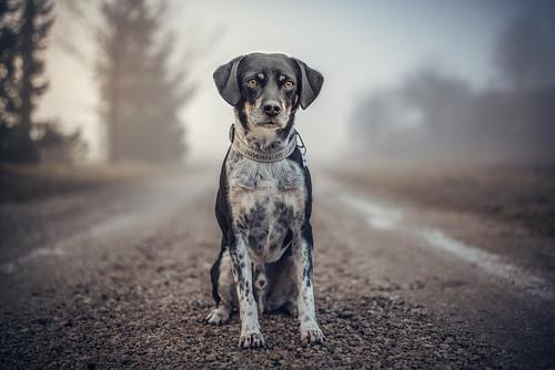 A Good Companion Shortens The Longest Road