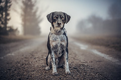 A Good Companion Shortens The Longest Road (Thomas Paal Photography) Tags: blau orange myst fog nebel frühnebel early morning morgen gassi spazieren walk dog hund pet vierbeiner haustier companion begleiter pfoten portrait nikon d750 50mm prime festbrennweite nikkor wide open road weg steine bamberg bischberg sonnenaufgang