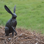 Handsome rabbit thumbnail