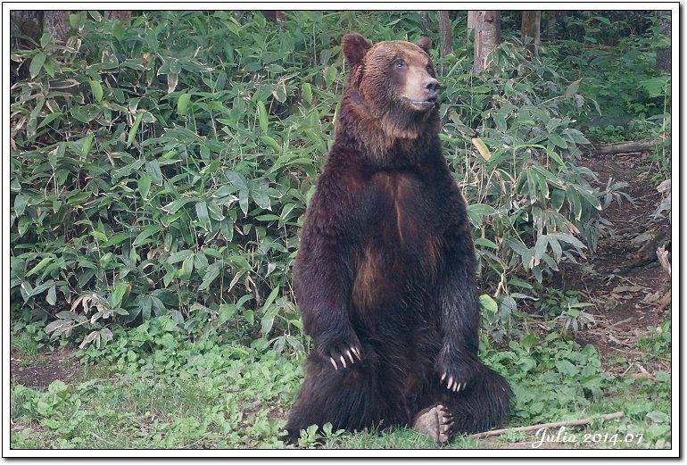 熊牧場 (12)