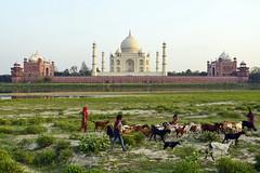 India - Uttar Pradesh - Agra - Taj Mahal - 19 (asienman) Tags: asienman indien agra mahal taj mughal architecture tajmahal asienmanphotography unescoworldheritagesite mughalarchitecture muslimart