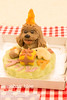 Your dog figure cake (INUGOHAN_WORLD) Tags: food dog art cooking dogs cake recipe healthy poodle foodart toypoodle dogcake cakeclass dogsweets dogrecipe figurecake dogrecipes