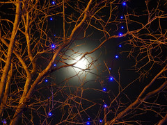Moon over Montmartre (Toni Kaarttinen) Tags: moon paris france tree night lights evening frankreich frana montmartre frankrijk prizs francia iledefrance parijs parisian pars  parigi frankrike  pary   francja ranska pariisi  franciaorszg  francio parizo  frana
