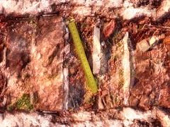 Narrenturm 61,5 - 79,9: Found piece of Broken Folding Ruler on the brick wall moss - Zollstock Teilstck Gliedergelenkstabma auf der Ziegel-Mauer Moos (hedbavny) Tags: vienna wien red color colour brick green rot yellow wall campus season psychiatry found austria sterreich moss exercise diary jahreszeiten collection unterwegs note gelb stonewall universitt grn farbe psychiatrie tagebuch fool nhm bunt moos mauer meterstab spaziergang insaneasylum fund narr etude nuthouse anatomie rosine narrenturm ziegel mentalinstitution sammlung lunaticasylum gugelhupf madhouse zollstock bung notiz pasin irrenhaus naturhistorischesmuseumwien alsergrund moosgrn pathologie lieblingsfarbe maigrn altesakh irr ziegelrot masstab gliedermasstab pathologisch rundgnge narrenhaus hedbavny pathologischanatomischesammlungdesnaturhistorischenmuseums ingridhedbavny narrenturmungezhlt gliedergelenkstabmas