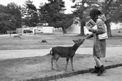 Feed me (Tatiana Malevich (neverbluda)) Tags: monochrome blackandwhite bnw bw nara japan park deer girl travel travelling street streetphotography