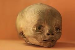 IMG_2260 (anthrax013) Tags: saint petersburg kunstkamera anatomy science medicine dead baby death necro necrophilia corpse abortion