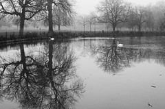 ** (donvucl) Tags: london clissoldpark winter ice reflections swans bw blackandwhite misty nikond7000 donvucl