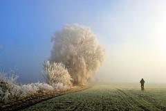 Neujahrslandschaft (Pixelkids) Tags: landschaft winterlandschaft bäume europa deutschland rauhreif winter bayern spaziergang feld mann hund