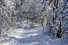 Winter Wonderland (A.Joseph Images) Tags: winter snow snowtrails d7200 nikkor70200f28 landscape hiver