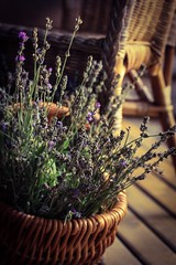 ..harvesting the smell of calmness.. (dawn.tranter) Tags: basket flower scented herb lavender harvesting smell calmness dawntranter