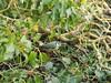 Bird (daleteague17) Tags: avian birds close species up zoom
