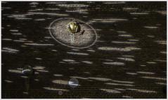 IMG_9261-1415 (annievanbroeck) Tags: sinttruiden nachtopname