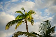 Bahamas-049.jpg (ajdoudt) Tags: patrick morning sunrise roper palmtree wedding vacation shannon bahamas shanny
