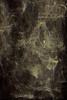Refractograph 138 (mtnrockdhh) Tags: abstract glass lensless caustics refractograph