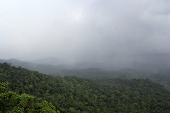 The scenery at Dare Nature Wayanad