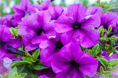 Flower (ValeTer_) Tags: flower ngc ecopark