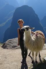 Lama (Schnitt). (Hel*n) Tags: peru llama perú helen lama machupicchu heln перу montañavieja