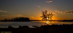Sunset on Astotin Lake, Elk Island National Park, Alberta, Canada (Artvet) Tags: sunset lake canada tree alberta elkislandnationalpark astotin sunsetonastotinlake