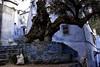 Chefchaoun , three ▲ (clémence·Liu ) Tags: tree oldman morocco maroc chefchaoun sonyrx1r clemenceliu