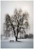 deeply rooted (Mostly Tim) Tags: trees tree árbol árboles baum bäume winter invierno