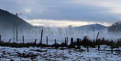 mist in the glen..............explored, thank you (Suzie Noble) Tags: strathglass struy farm field mist