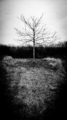 Winter Tree (Dave G Kelly) Tags: tree outdoors day winter vertical blackandwhite monochrome one alone bw hedge germany deutschland nature nokia cameraphone grass