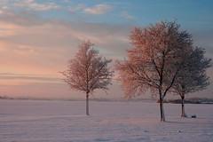 De ochtend van de maansverduistering (Ko Hummel) Tags: emmen nederland winter landschap 2010 10000 panoramio289204445413217