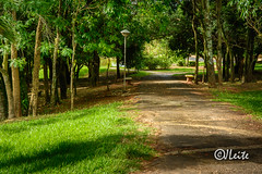 The Path (JJLeite) Tags: brasil arvoredo praça caminhos américadosul santacatarina br bra sc saopaulo brazil banco