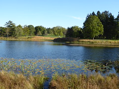 Lisle, IL, Morton Arboretum, Meadow Lake in the Fall (Mary Warren (7.8+ Million Views)) Tags: lisleil mortonarboretum fall landscape pond lake water nature trees plants green leaves foliage