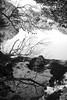"""Untitled"" (森 万恭) Tags: kern macroswitar 50mm f19 pond garden park tree 新宿御苑 東京 leicamp240 leica"