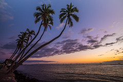 Sunset at the Front (Prab Bhatia Photography) Tags: sunset colours colors palm tree maui hawaii lahaina frontstreet