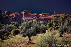 Village de Sainte Lucie de Tallano et sa belle oliveraie (Corse) (tognio62) Tags: arbre exterieur été panorama prairies végétation village pré corse corsica oliviers canoneos6 maisons