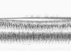 TenderWhite.jpg (Klaus Ressmann) Tags: klaus ressmann agoettelsbrunn austria landscape nikon snow vineyard winter blackandwhite design flcnat minimal softtones white klausressmann