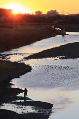 Morning Fisherman (Tama River) (seiji2012) Tags: 多摩川 立川市 釣り人 日の出 シルエット 逆光 fisherman river tamariver sunrise silhouette reflection tachikawa