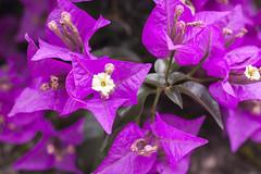 Flores de verano lluvioso. (www.rojoverdeyazul.es) Tags: autor álvaro bueno españa spain summer verano flores flowers