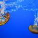 Sea Nettle (