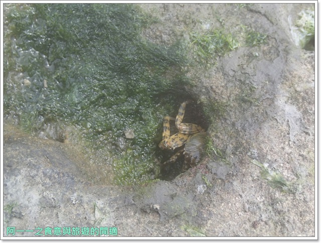 北海岸旅遊石門景點石門洞海蝕洞拱門海岸北海岸旅遊石門景點石門洞海蝕洞拱門海岸image030