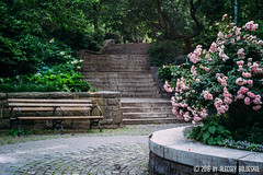 ROMANTIC NEW YORK (Alecsey Boldeskul Photography) Tags: park old newyorkcity pink nature beautiful up rose stone stairs garden landscape bush cityscape outdoor path walk pastel postcard scenic parks walkway urbannature environment picturesque pathway artphotography artisticexpression creativephotography carlshurzpark