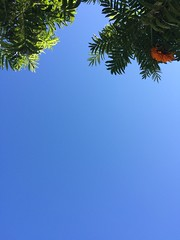 (Karen Kirchner) Tags: blue floripa sky beautiful azul lunch florianpolis laranja flor banco dia lindo whatever praa ceu almoo americanas companhia idk