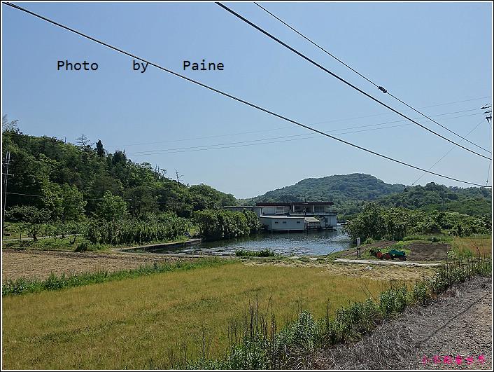 和歌山大池遊園-平池綠地公園 (3).JPG