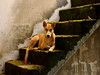,, Stairway 2 Heaven ,, (Jon in Thailand) Tags: dog stairs nose moss eyes nikon tail ears mama stairway jungle worried mold paws nikkor k9 d300 thelittledoglaughed youngdog 70300vr stairway2heaven abandonedabusedstreetdogs littledoglaughedstories