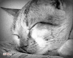 el gladiador (wilprog) Tags: bw blancoynegro gato mudanza bianconero gladiador catire blackandwhiteonly